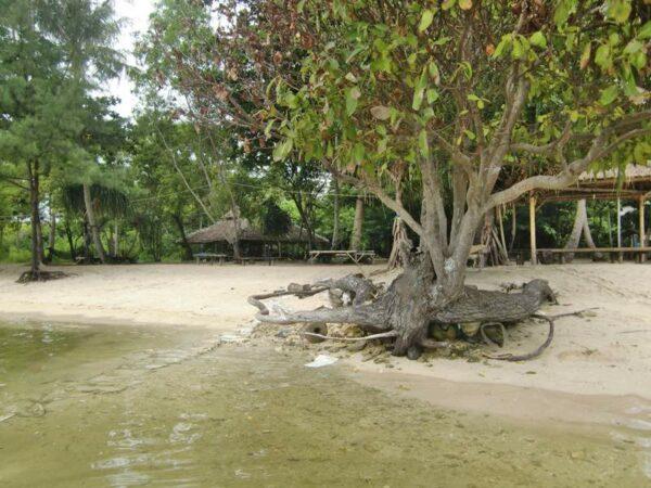 Pepohonan yang masih rimbun di sekitar pantai Kresek membuat cuaca panas tetap adem.