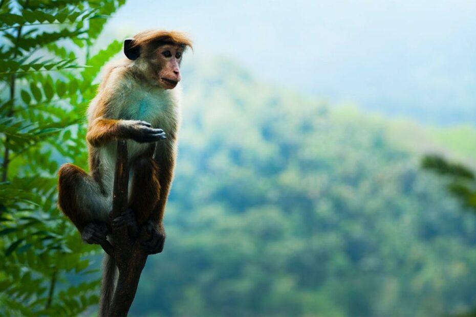 Kebun Binatang di Indonesia
